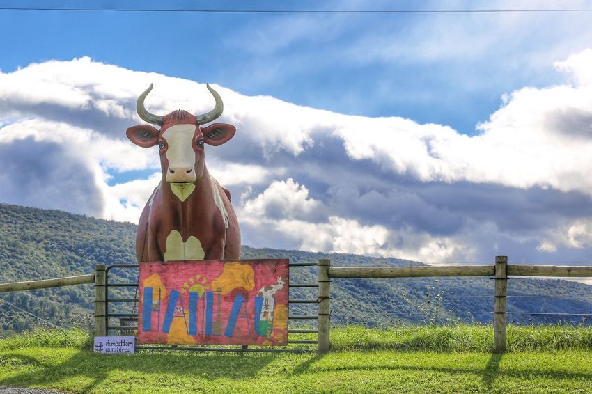 Big bull watching over the farm. JGLowe Longhorn Bull Cloud - Sky Sky No People Representation Day Art And Craft Nature Fence Boundary Barrier Human Representation Outdoors Protection Grass Security Creativity Plant Safety Field Mountain