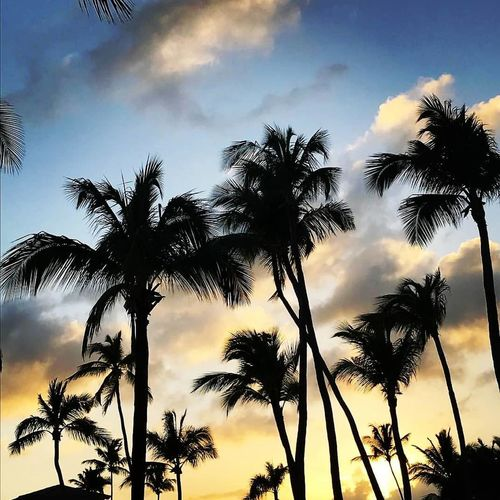 Tree Tree Area Palm Tree Plant Part Sunset Tree Trunk Rural Scene Forest Silhouette Blue First Eyeem Photo