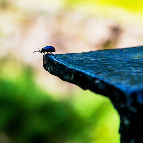 Capture The Moment Abugslife Nature Nature Photography Bugs Beetle Insect Photography