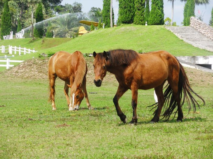 Horses grazing in ranch