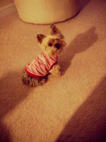 One Animal Animal Themes Pets Mammal Domestic Animals Dog No People
