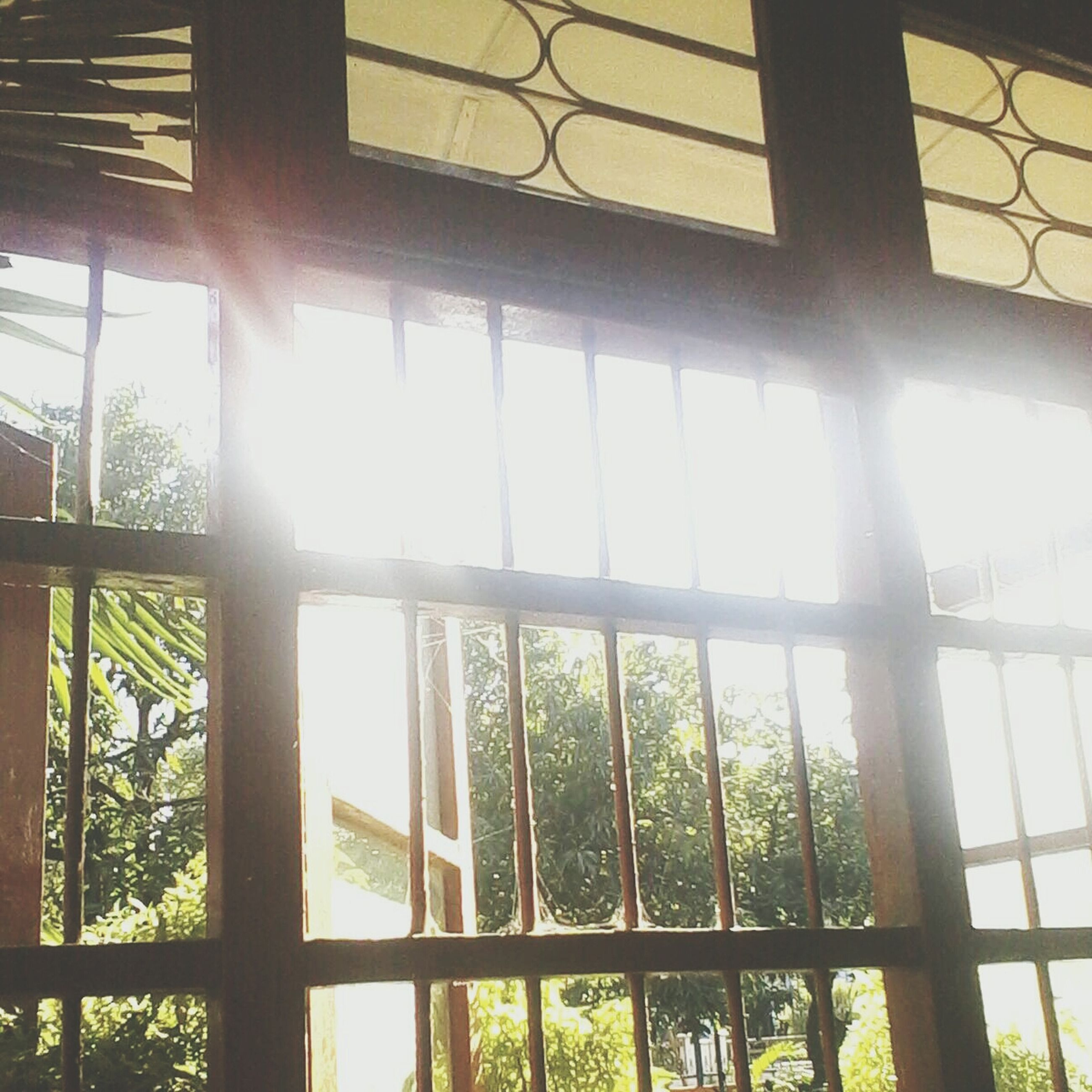 window, indoors, sunlight, sun, glass - material, fence, tree, sunbeam, transparent, day, railing, nature, no people, built structure, protection, pattern, growth, lens flare, safety, plant