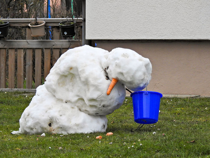 Carotte Fun Grass Melting Winter Animal Themes Architecture Bird Building Exterior Close-up Day Domestic Animals Grass Mammal Nature No People One Animal Outdoors Pets Snowman Spring Swan White Color