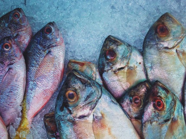 Fish Ice Freeze Fish Market Pattern Blue Travel Photography The Week Of Eyeem Showcase March