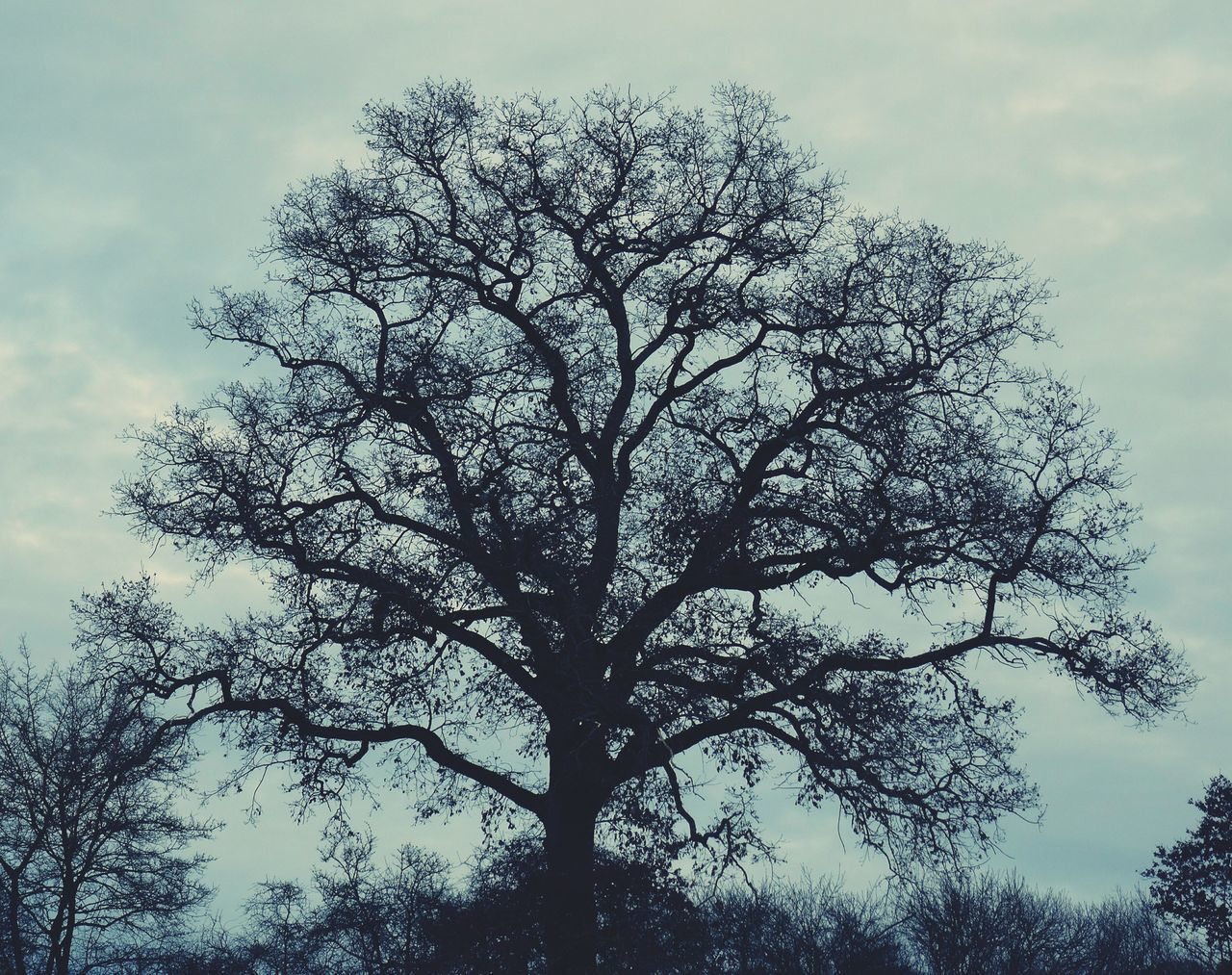 tree, low angle view, nature, sky, branch, outdoors, beauty in nature, no people, growth, day, height