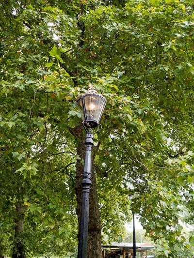 Love London GREEN BACKROUND Grey Day LONDON❤ Gas Lampposts Green Leaves Plane Tree St James Park London