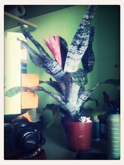 Le Plant