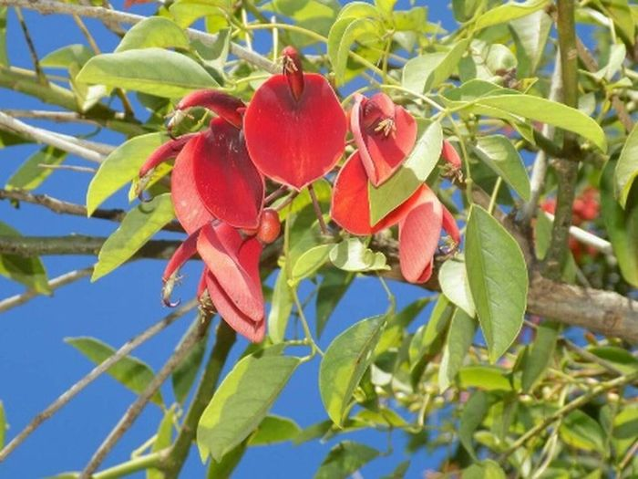 Tree Red Close-up Plant Green Color Petal Single Flower Fragility