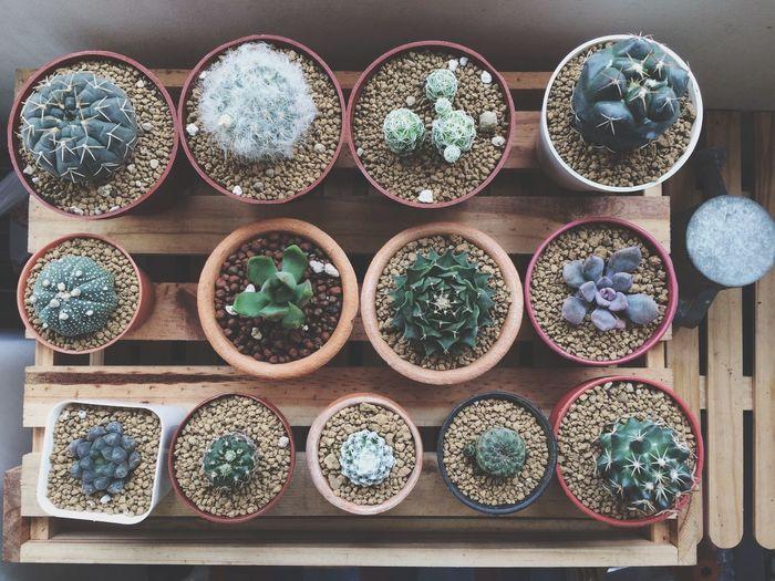 Cacti Cactus Cacti Homedecor Interior Design Nature Plants Gardening Urban Gardening Succulents Decoration