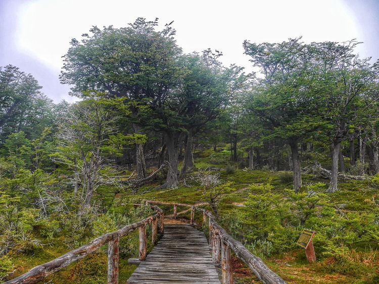 Tal cual... EyeEm Nature Lover Point Of View From My Point Of View Peace And Quiet Enjoying Nature Trekking Relaxing Enjoying Life Showcase: February Quality Time Trees Parque Nacional Tierra Del Fuego Ushuaïa On The Way