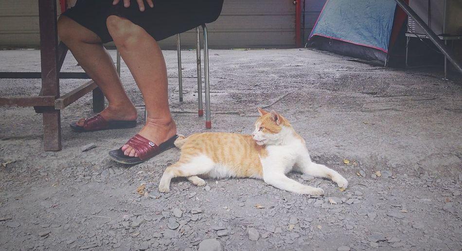 Capture The Moment Cat
