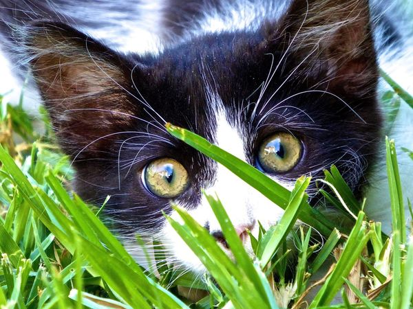 Catlove Catlovers Cats Catlover Cat Lovers Wide Eyed Wonderment Wide Eyed Wonder Cat Love Cat Lover Kitten Black And White Cat Black And White Black & White Blackandwhite Black&white Blackandwhitecat Cute Cutecats Cutecat Cute Cats Cute Cat Cat Selfie... Cat Selfie Close-up Close Up