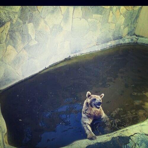hayvanat bahçesinden bir kare -darıca