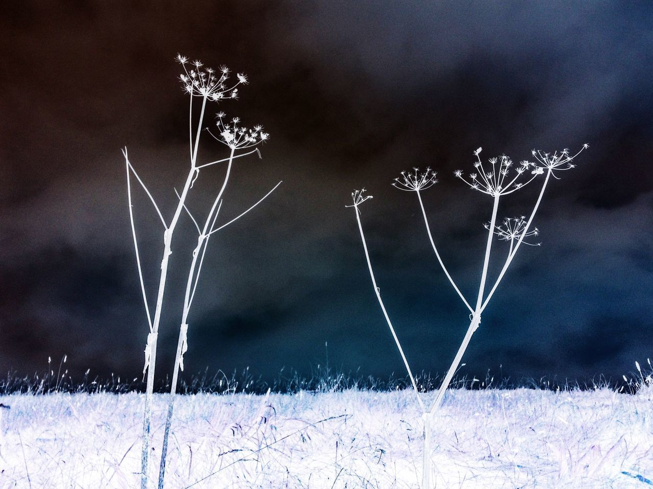 winter, snow, cold temperature, nature, focus on foreground, no people, beauty in nature, tranquility, frozen, close-up, plant, field, outdoors, scenics, fragility, night, sky
