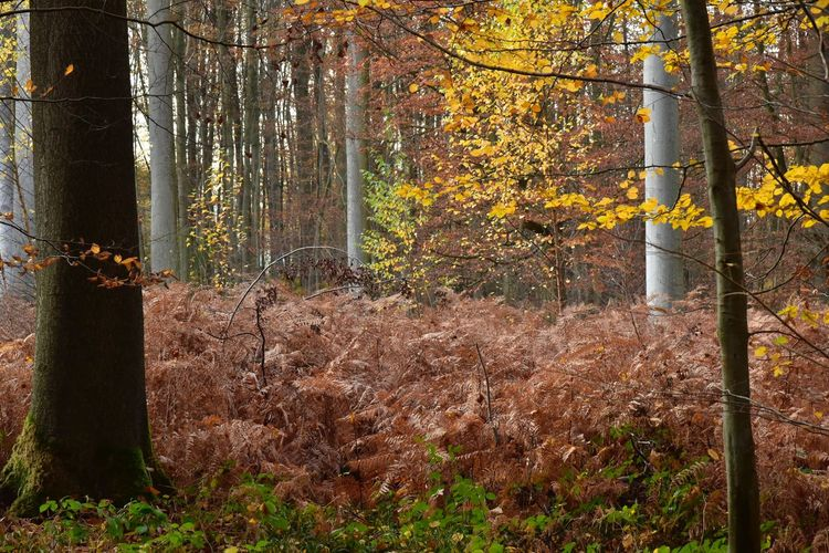 Autumn colors Light Effect Sonian Forest Fern Plant Nature Tree Growth Day No People Sunlight Outdoors Land Forest Beauty In Nature Tree Trunk Trunk Tranquility Protection Safety Security Autumn Pattern Fence