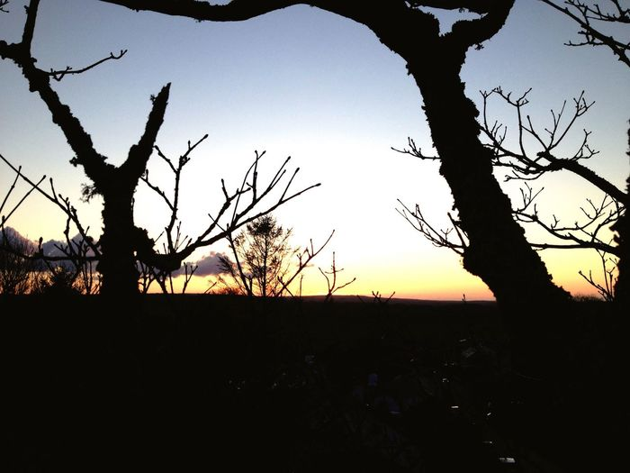 Sunset from up a tree Branchsilhouette Tree Sunset_collection Sunset #sun #clouds #skylovers #sky #nature #beautifulinnature #naturalbeauty #photography #landscape Sunset Sky_collection