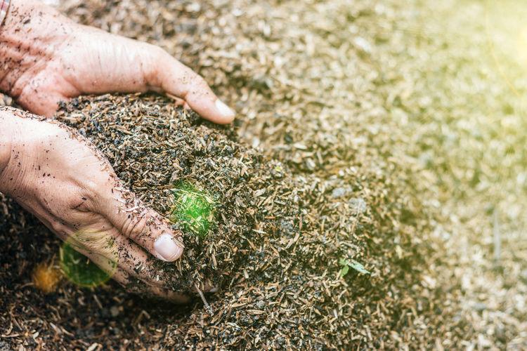 Close-up of hands picking up dirt