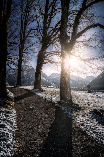 Tree Winter Outdoors Snow Sun Wanderlust Taking Photos Sunlight Road Mountain Sky Clouds Nature Beauty In Nature Water Tranquility Plant Scenics - Nature No People Tranquil Scene Bare Tree Day Trunk Tree Trunk Land Non-urban Scene Bright