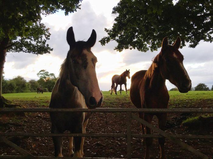 Horse Horse Horses Horseriding Horse Riding England, UK Horse Life Horse Love Shadow Shadows & Lights Field England