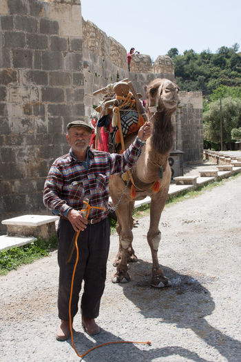 Kawanserie Alarahan, Kamelfühere für Touristen Camel, Animal Kawnserei Alaharan, Kamelführe Travel Photography Turkey Day Domestic Animals One Animal Outdoors Travel Destinations Mobility In Mega Cities