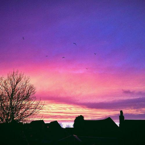 Sunset Clouds And Sky Putabirdonit AMPt_community