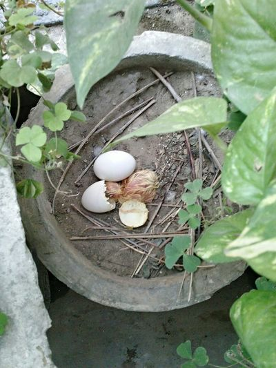 Seconds after the birth of young one.. Hatching Of Pigeon's Egg First Eyeem Photo