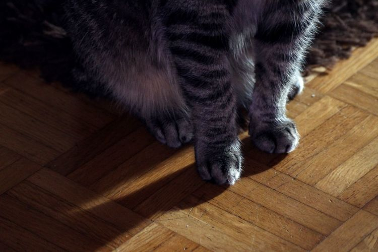 Paw Paws Cat Paws Cat Photography Cat Legs Shadows & Lights Light And Shadow Cat Chilling Sitting Down Sitting Alone Cat Single Light Source Naturallight Relaxing Cat Relaxed Cat Natural Light Cats Cats Of EyeEm Relax Little Tiger Minimalism Wooden Floor