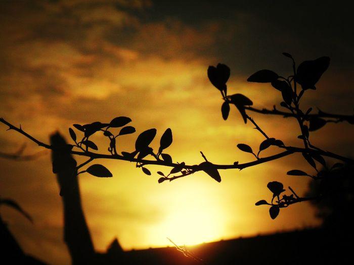 Sunset di tanah anarki,, Sunset Sun_collection Silhouette Popular Photos