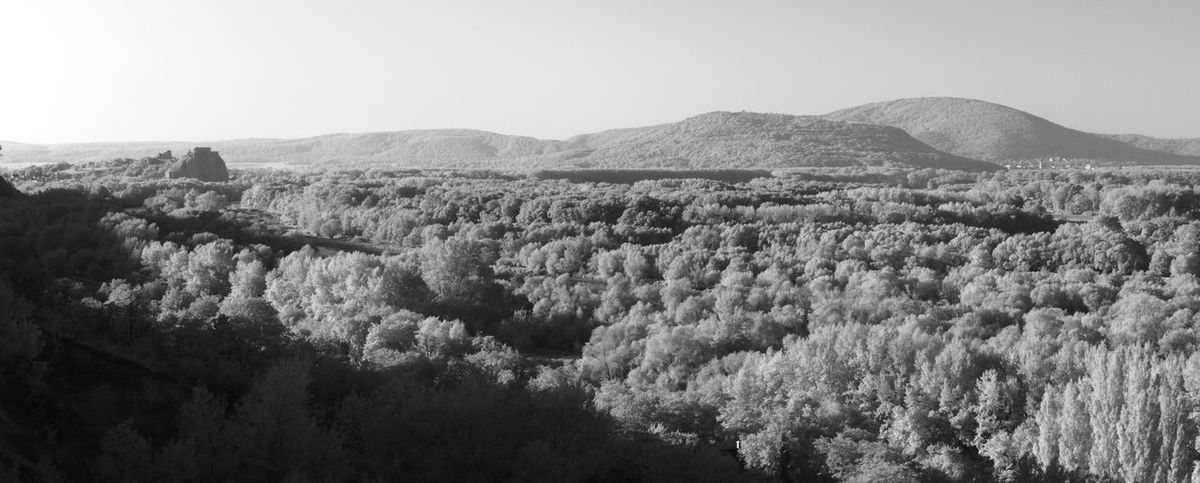 True monochrome infrared Infrared Panorama Beauty In Nature Black And White Blackandwhite Day Forest High Angle View Infrared Photography Landscape Monochrome Mountain Nature No People Outdoors Scenics Sky Tranquility Tree Castle Castle Ruin Devin Devin Castle Lost In The Landscape