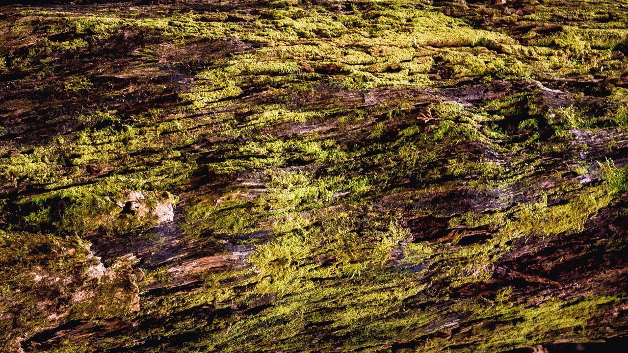 nature, rock - object, moss, outdoors, no people, river, tranquility, day, textured, beauty in nature, full frame, backgrounds, water, scenics, close-up