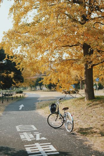 Bicycle on road in autumn