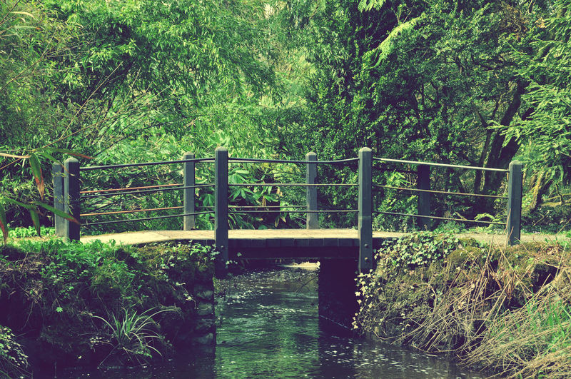 Bridge Cross The River Forest Green Color Someone's Garden Wood