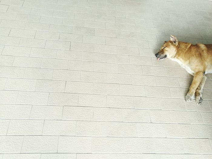 Dog on wall