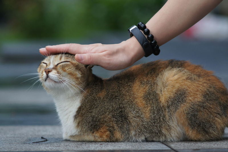 Close-Up Of Hand Petting Cat On Street
