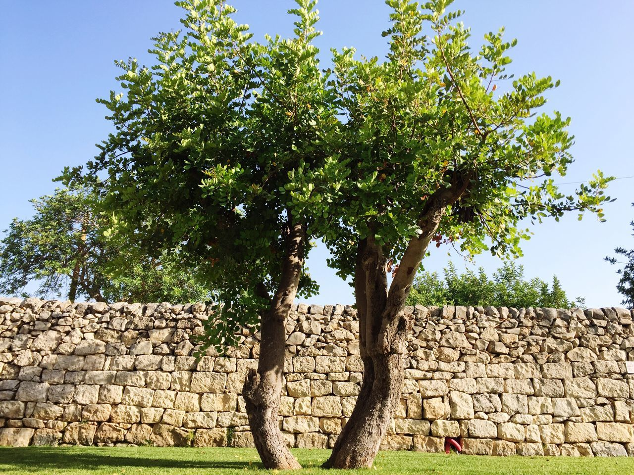 Trees Growing On Field Against Stone Wall