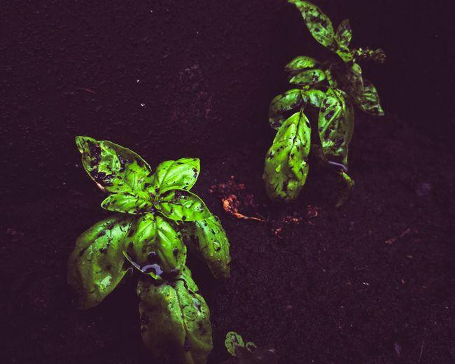 🌿🌱 Plant Life