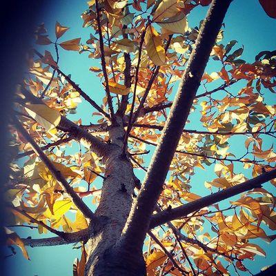 осень не хочу тебя отпускать... Autumn Sky Sun evening europe vscocam vscostyle vscoonly vscogood vsco mystery colors yellow nature