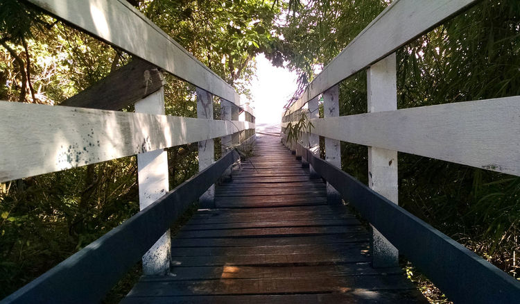 Architecture Bridge Bridge - Man Made Structure Built Structure Canal Connection Day Deck Diminishing Perspective Direction Footbridge Footpath Gardem Land Long Nature No People Outdoors Plant Railing The Way Forward Tranquility Tree Water Wood - Material