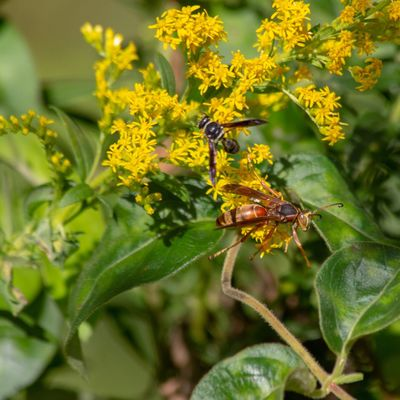 Canon EOS 60D Animal Animal Wildlife Animal Themes Animals In The Wild Insect Invertebrate One Animal