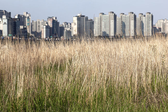 Apartment Beauty In Nature City Day Field Flower Grass Green Color Growing Growth Landscape Nature No People Outdoors Plant Reed River Rural Scene Sky Tranquil Scene Tranquility