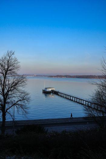 Water Sky Tree Beauty In Nature Tranquility Blue Bare Tree Kieler Förde Bay Wintersun Pier Waterside Baltic Sea