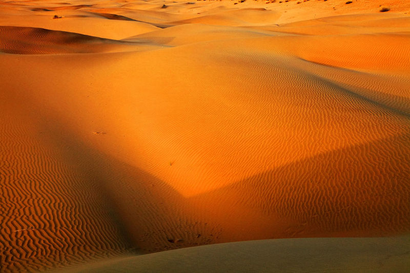 Canon Abstract Back Dry Extreme India Landscape Nature Pattern Shape Step Thar Thar Desert Tourism Touristic Destination Trace Travel Travel Destinations Travel Photography Wind