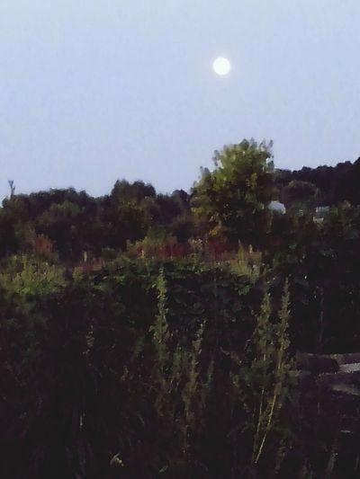 Луна *_* Flowers