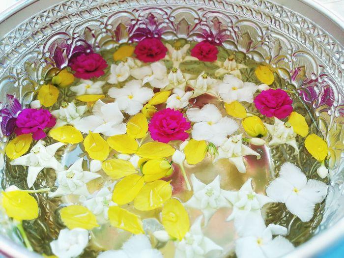 Multi Colored Yellow Close-up Flower Freshness Green Color Beauty In Nature EyeEm Songkran Songkran Thailand Songkranfest