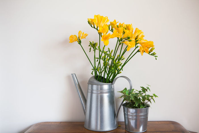 Beauty In Nature Blossom Bouquet Close-up Flower Flower Arrangement Flower Head Flower Pot Fragility Freesia Freshness Indoors  Ivy Nature No People Petal Plant Vase Yellow Paint The Town Yellow