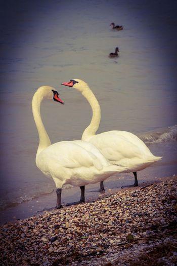 Liefde is Bird