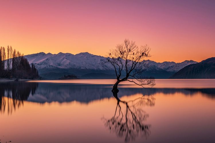 That famous Tree on New Zealand's Lake Wanaka at sunset with the birds sitting ready for a night of peace and tranquility Bare Tree Beauty In Nature Cold Temperature Dawn Day Idyllic Lake Landscape Mountain Mountain Range Nature No People Outdoors Reflection Scenics Sky Snow Sunset The Great Outdoors - 2017 EyeEm Awards Tranquil Scene Tranquility Tree Water Wilderness Area Winter The Great Outdoors - 2018 EyeEm Awards