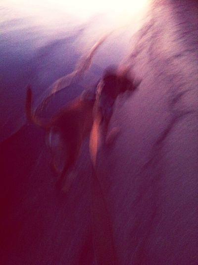 Life flying bye Blur Lifesablur Ilovemydog Puppy Love