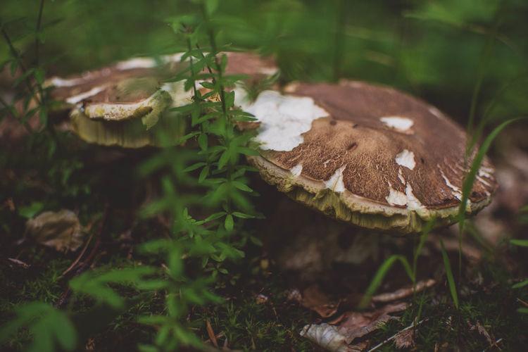 Close-up of mushroom growing on tree stump
