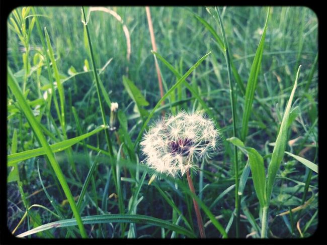 Dandelion Nature Picnic Spring